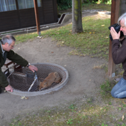 Hund und Fuchs kommen in dem Kessel der Schliefenanlage nie in direkten Kontakt. (Foto: DJV)