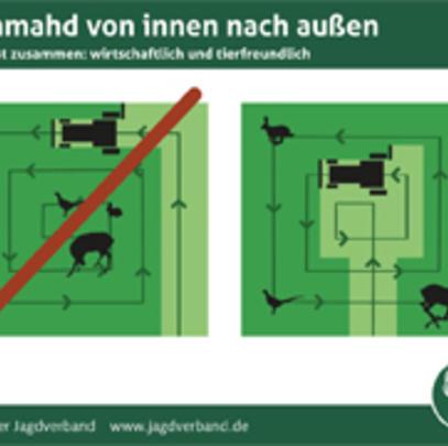 Frühmahd: Die richtige Mähtechnik kann Eltern- und Jungtiere retten. (Quelle: DJV)