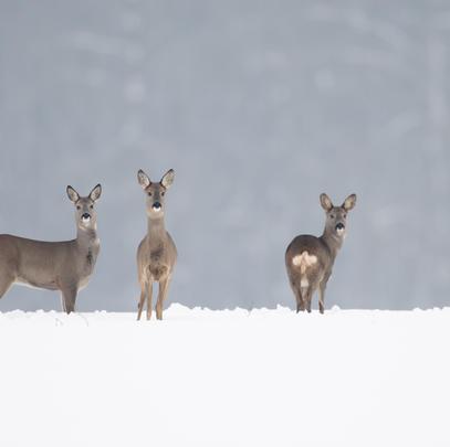 Dem Lebensraum Wald und deren Bewohner ist Sorge zu tragen. (Quelle: Rolfes/DJV)