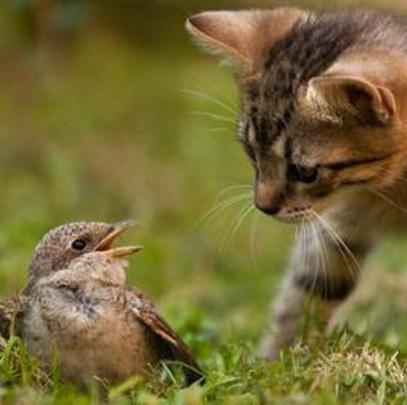 Junge Katze jagt Vogel (Quelle: ru.gde-fon.com)